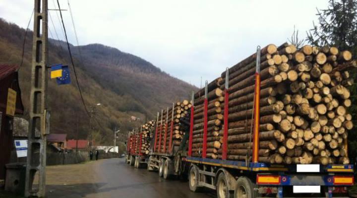 George Simion pus pe mafia lemnului: Pentru AUR pădurile sunt o prioritate imediată – ROPRES.RO