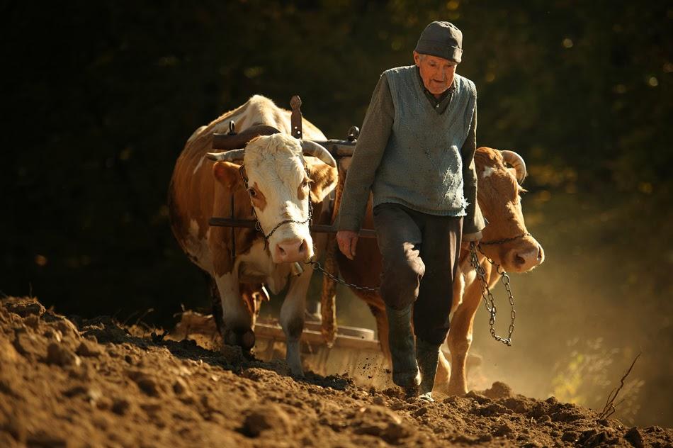 Fermierilor le-a ajuns cuțitul la os: Satul românesc e depopulat, iar zootehnia e în moarte clinică