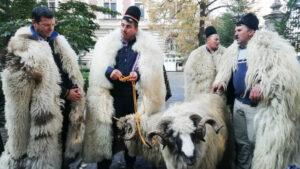 Nicolae Cioranu, crescător de oi: ONG-urile care cer stoparea exportului de animale au interese ascunse